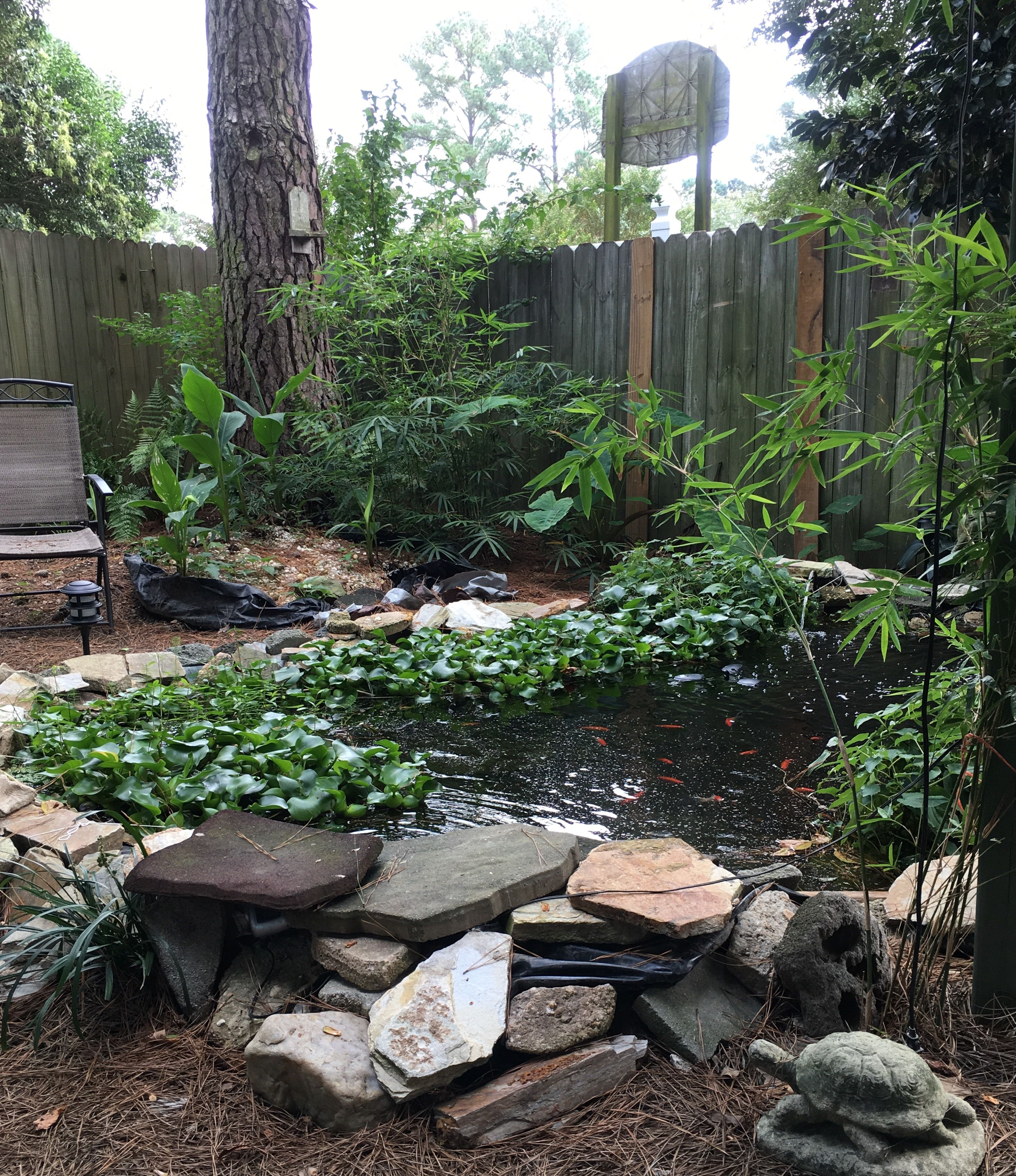 Diy Backyard Pond Plants