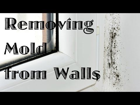 Removing Mold from Painted Walls and Ceiling ThriftyFun D IY