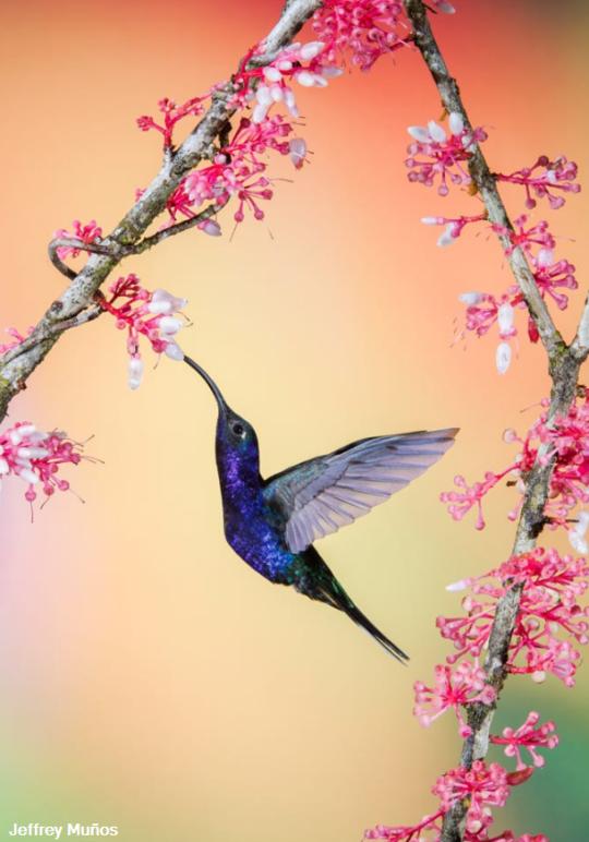 Tumblr Opec5jetof1rcreq5o1 540 Png 540 772 Pajaros Exoticos Aves Pajaros Pajaros Y Flores