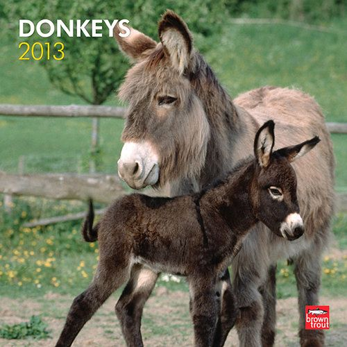 Donkeys 2013 Wall Calendar | Horses | Donkey, Animals, Farm animals