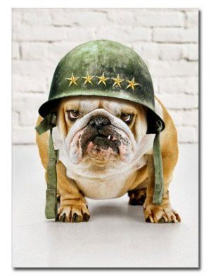 """Bulldog in Army Helmet Father's Day Card, from Dogstuff.com. Inside message: """"Happy Father's Day... from the troops!"""" An envelope is included with this single 5"""" x 7"""" greeting card.16008"""