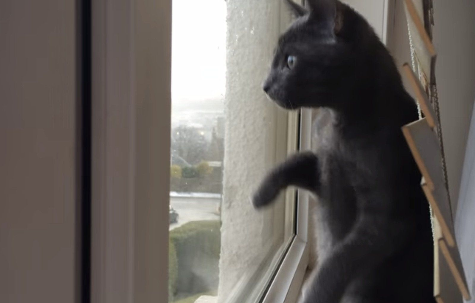 Kitten Sees Snow For The First Time And Is Beyond Excited Video Why Do Cats Purr Kittens Tiny Cats