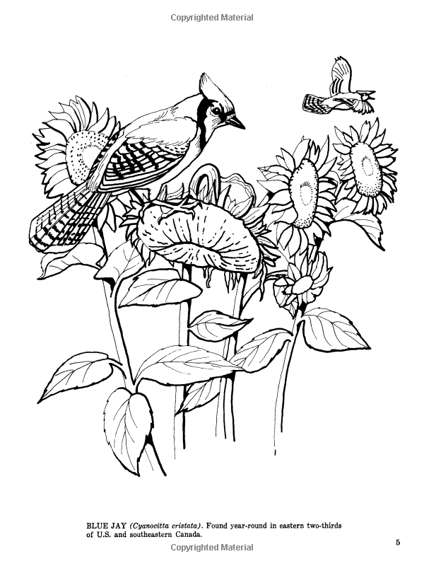 Fifty Favorite Birds Coloring Book (Dover Nature Coloring