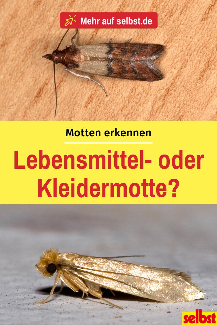 Lebensmittelmotten Bekampfen Selbst De Kleidermotten Lebensmittelmotten Motten In Der Wohnung