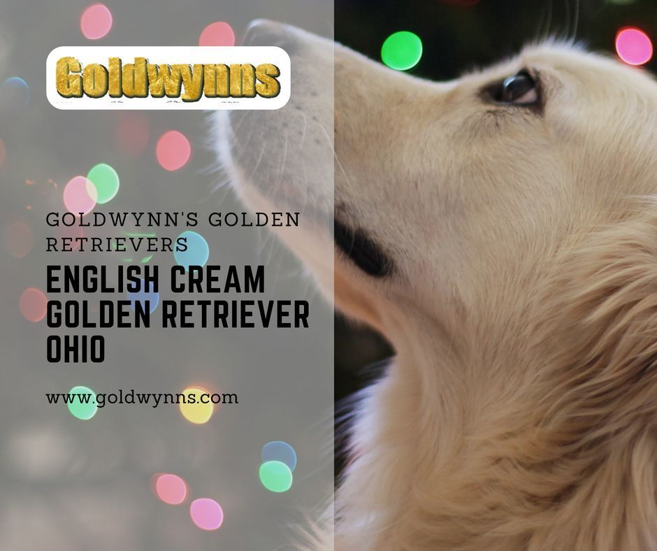 Golden Retriever Puppies Are Known For Their Friendly And Obedient Nature They Are One Of The Cutest Breeds That Everybody Puppies Golden Retriever Retri