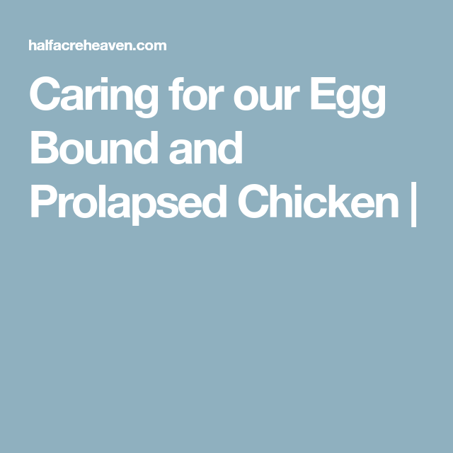 Caring For Our Egg Bound And Prolapsed Chicken (With