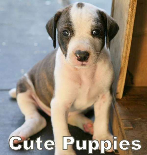 Cute Puppies Make Us Smile More Adorable Pics Of Puppies Http