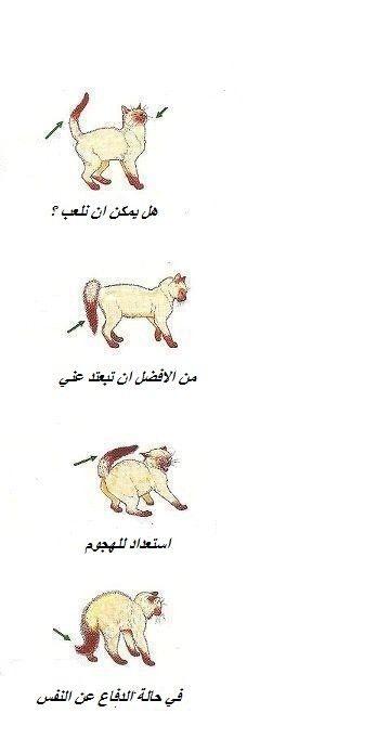 لغة القطط كيف تقرأ أفكار القطط من خلال إيماءاتها Cartoon Wallpaper Hd Cute Animals Animals