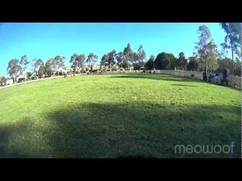 Rouse Hill Dog Park (dog cam)