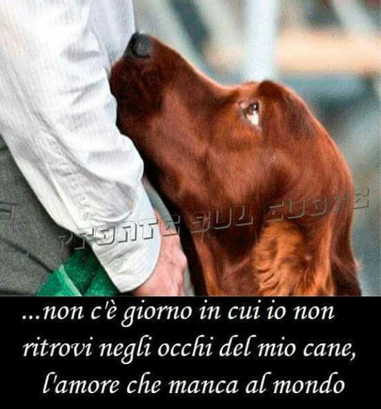 Pin Di Cinzia Fil Su Cani Pinterest Cani Animali E Cuccioli
