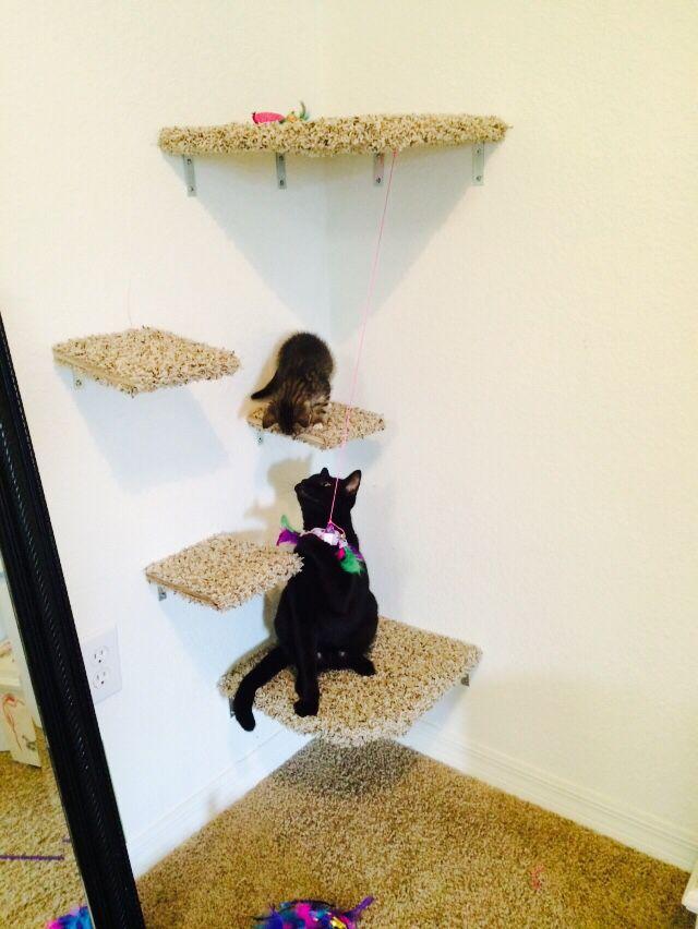 Cat Playground Cute Cat Playground Cat Shelves Kittens