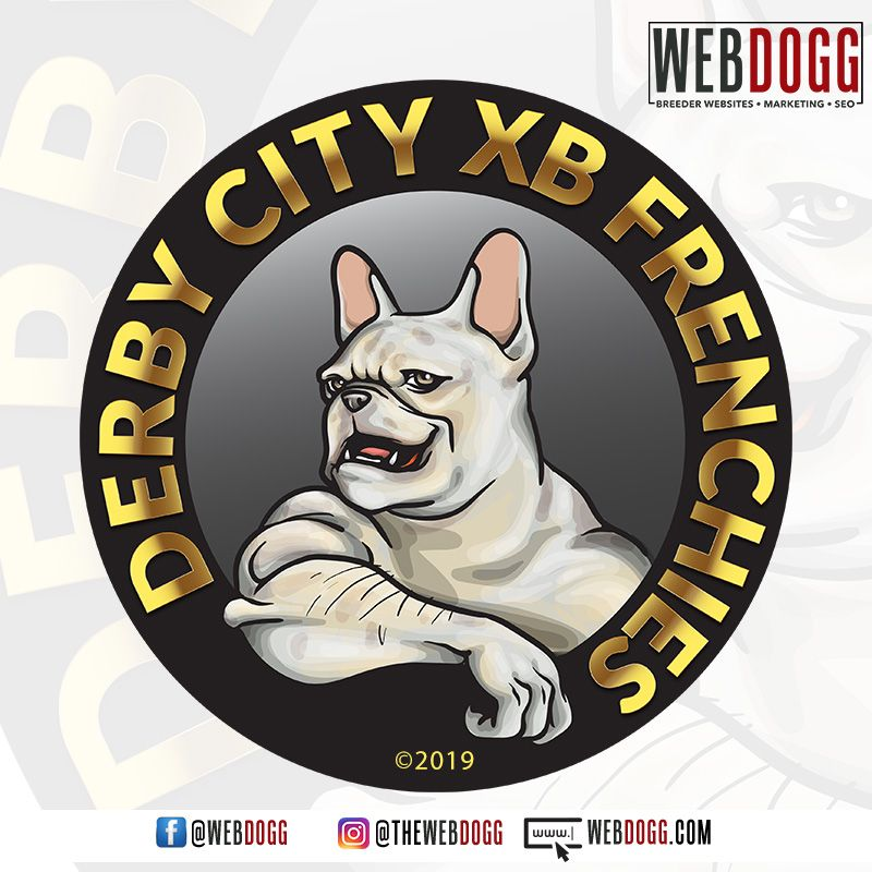 Logo Design For Derby City Xb Frenchies Derbycityxbfrenchies