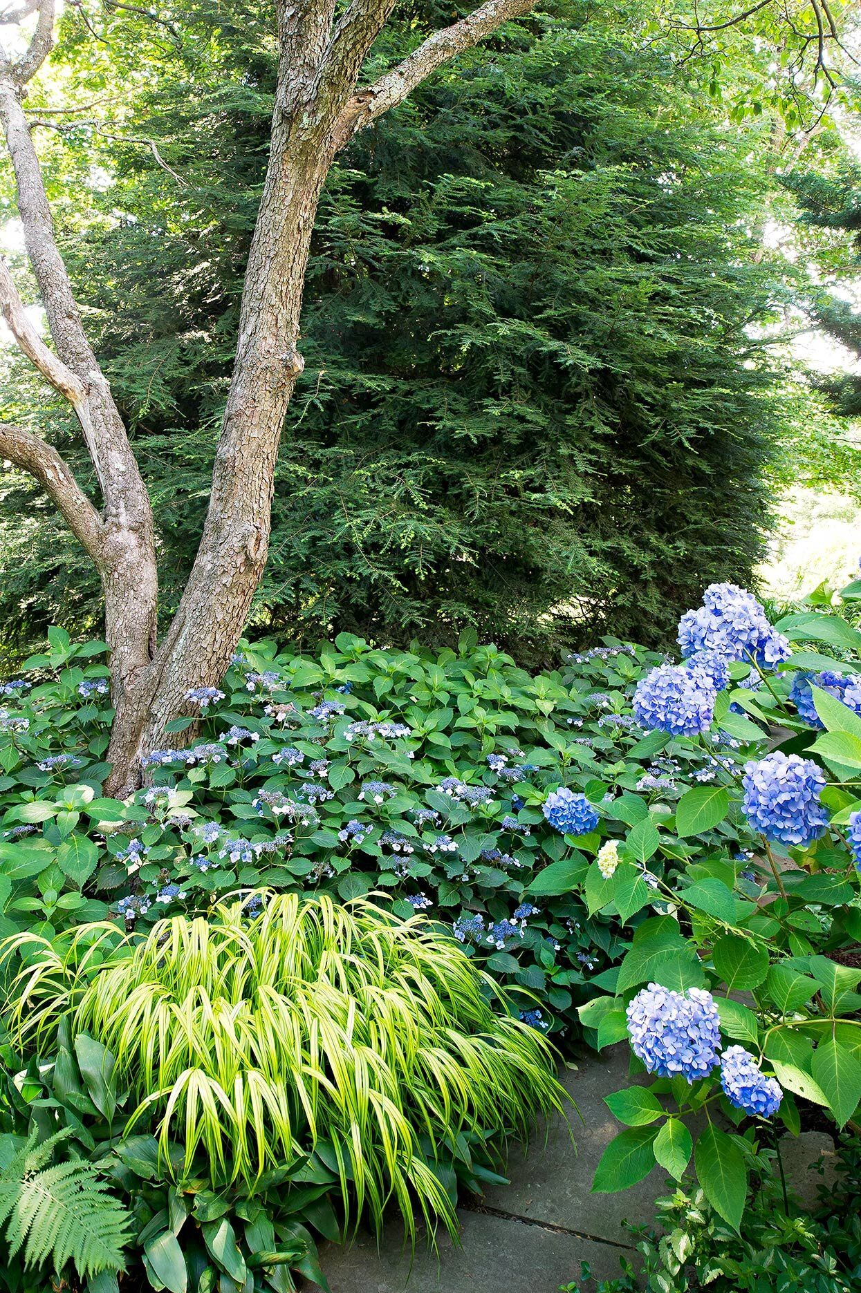 30 Ways To Pair Plants For The Most Beautiful Garden Most