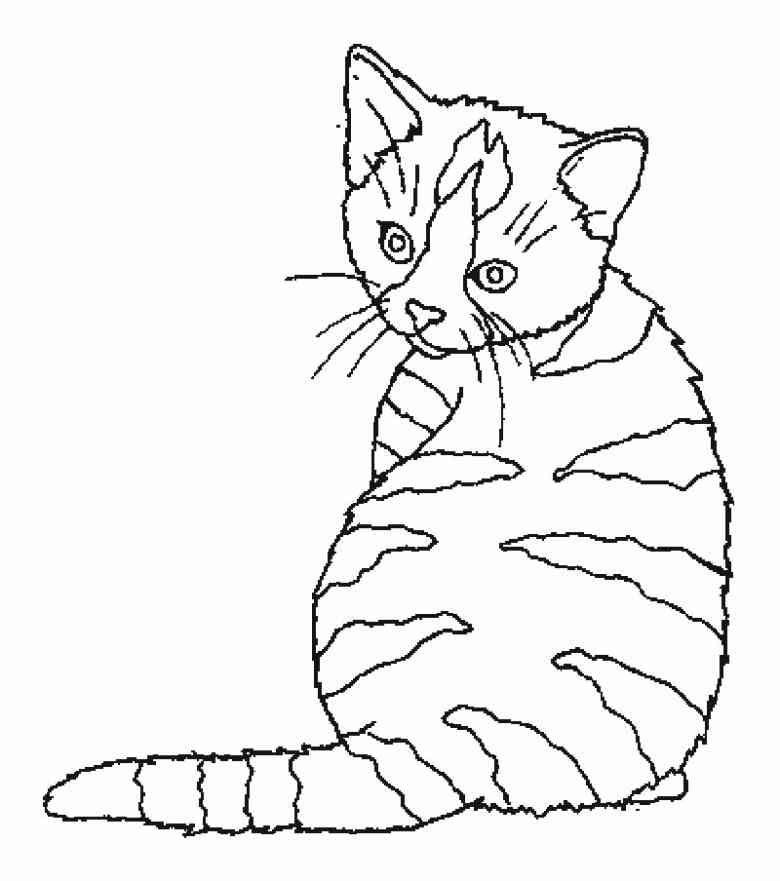 bildkatzemalvorlage7 780×881  cats  pinterest