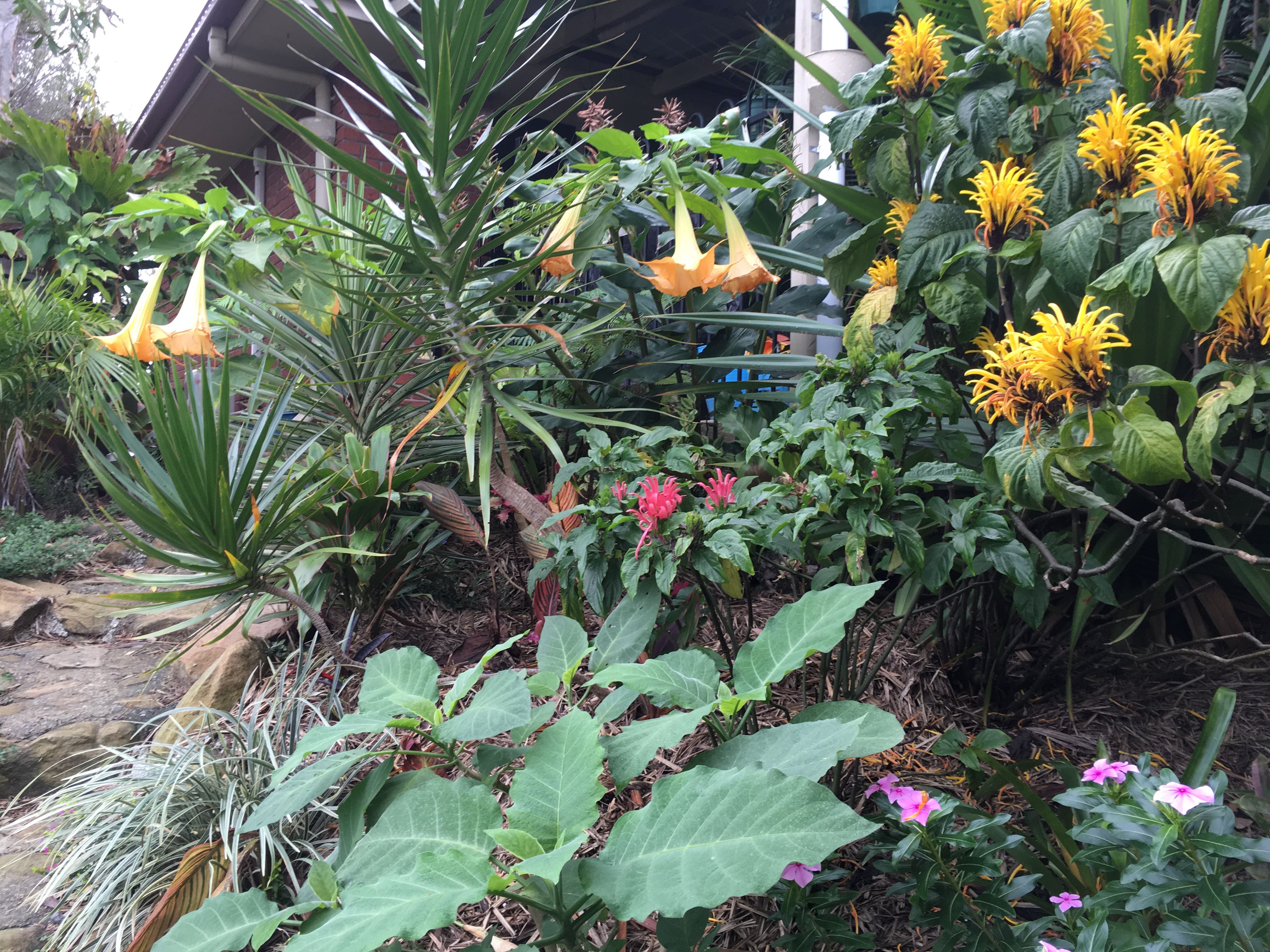 Pin by letty gonzalez on tropical gardens   Pinterest   Tropical ...