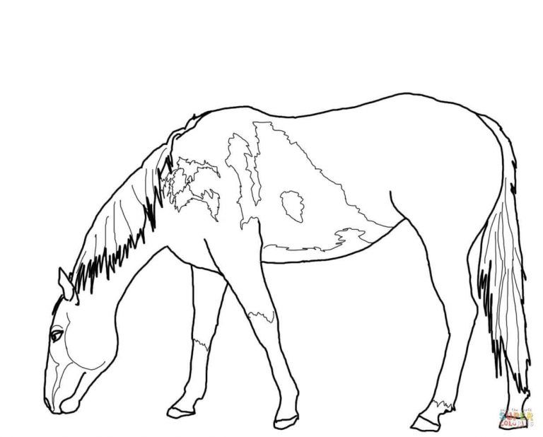 Free Printable Coloring Pages In Grazing American Quarter Horse Coloring Pages Horse Coloring Pages Horse Coloring Free Printable Coloring Pages