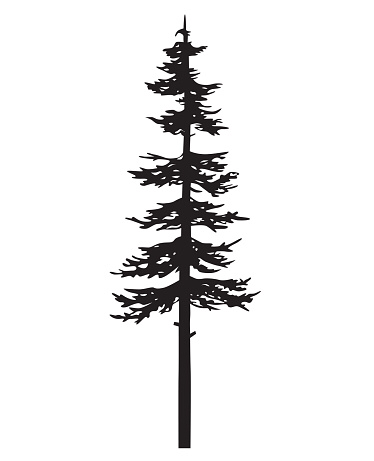 Vector Isolated Silhouette Of A Coniferous Tree Pine Tree Silhouette Pine Tree Drawing Tree Silhouette Tattoo