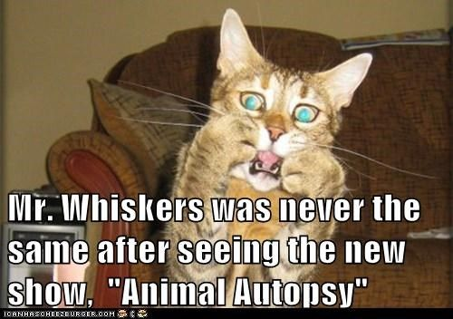 Poor Mr Whiskers Cat Memes Cat Videos For Kids Funny Cat Photos