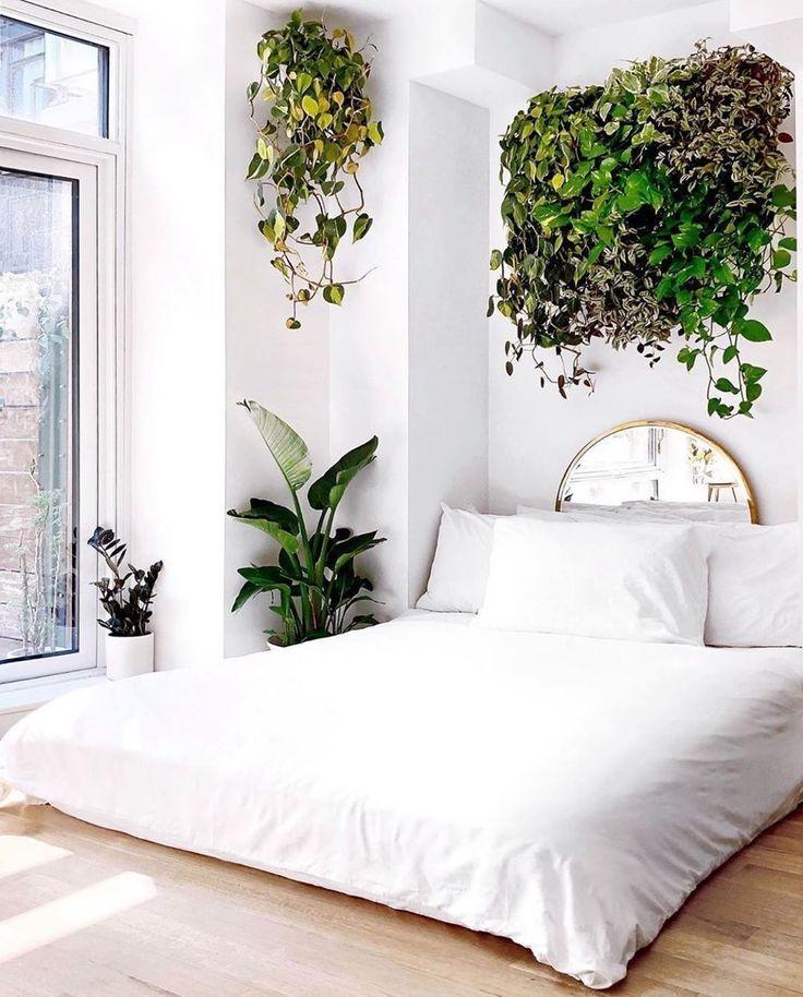 traiing plants hanging plants planting on walls bedr