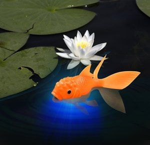KOI TOY-    A glowing goldfish!    This delightfully realistic floating koi lights up the second it touches water, glowing brilliantly in a rainbow of hues.    Sure, Koi Toy is fun for the tub, but also great in punch bowls, fountains, bird baths, and puddles.