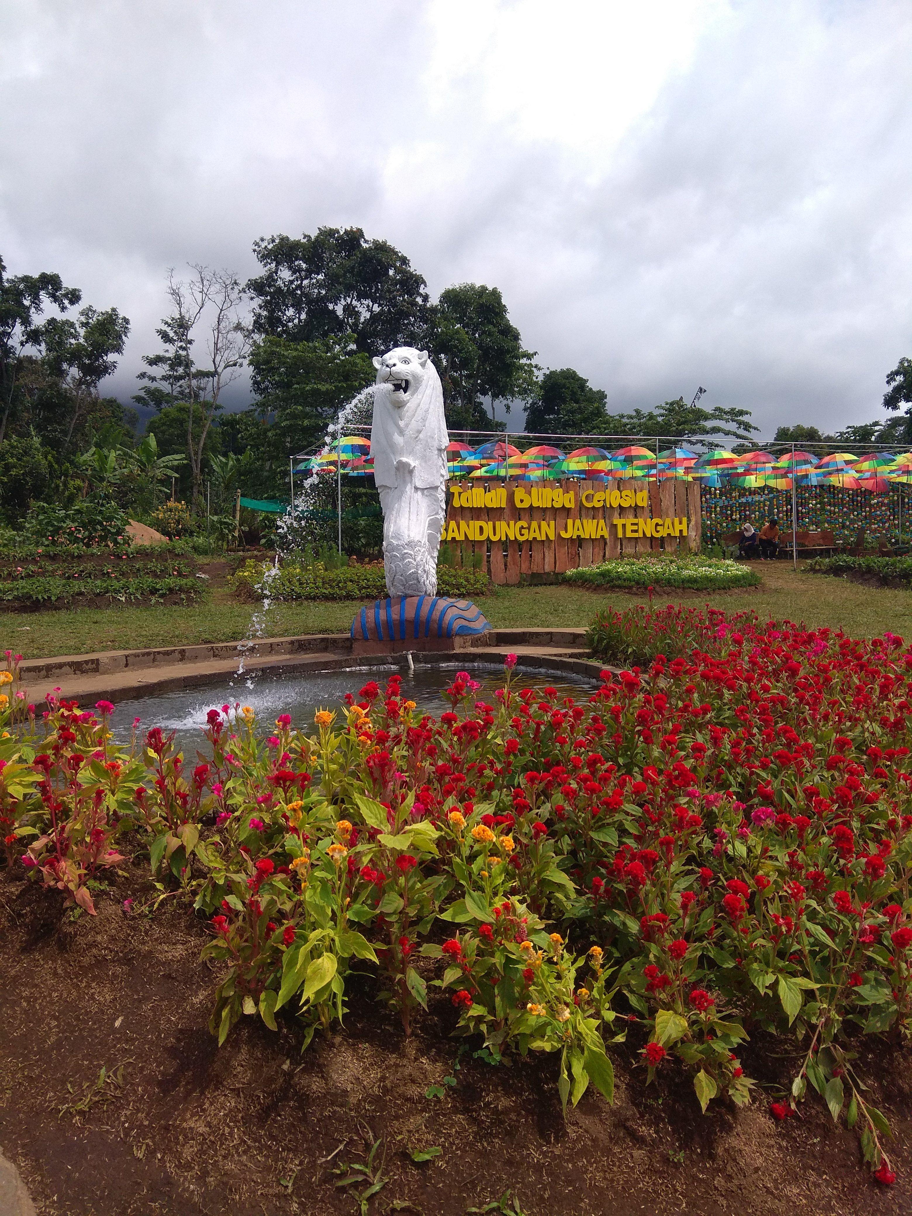 Foto Taman Bunga Di Semarang Wisata Yang Terletak Di Kawasan Candi Gedong Songo Bandungan Kabupaten Semarang Kalau Mau Foto Bunga Taman Bunga Gambar Bunga