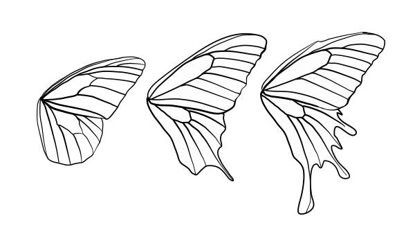 Butterfly Wing Shapes | Drawingbutterfly_8-2_design_shape | Butterflies | Drawings Butterfly ...