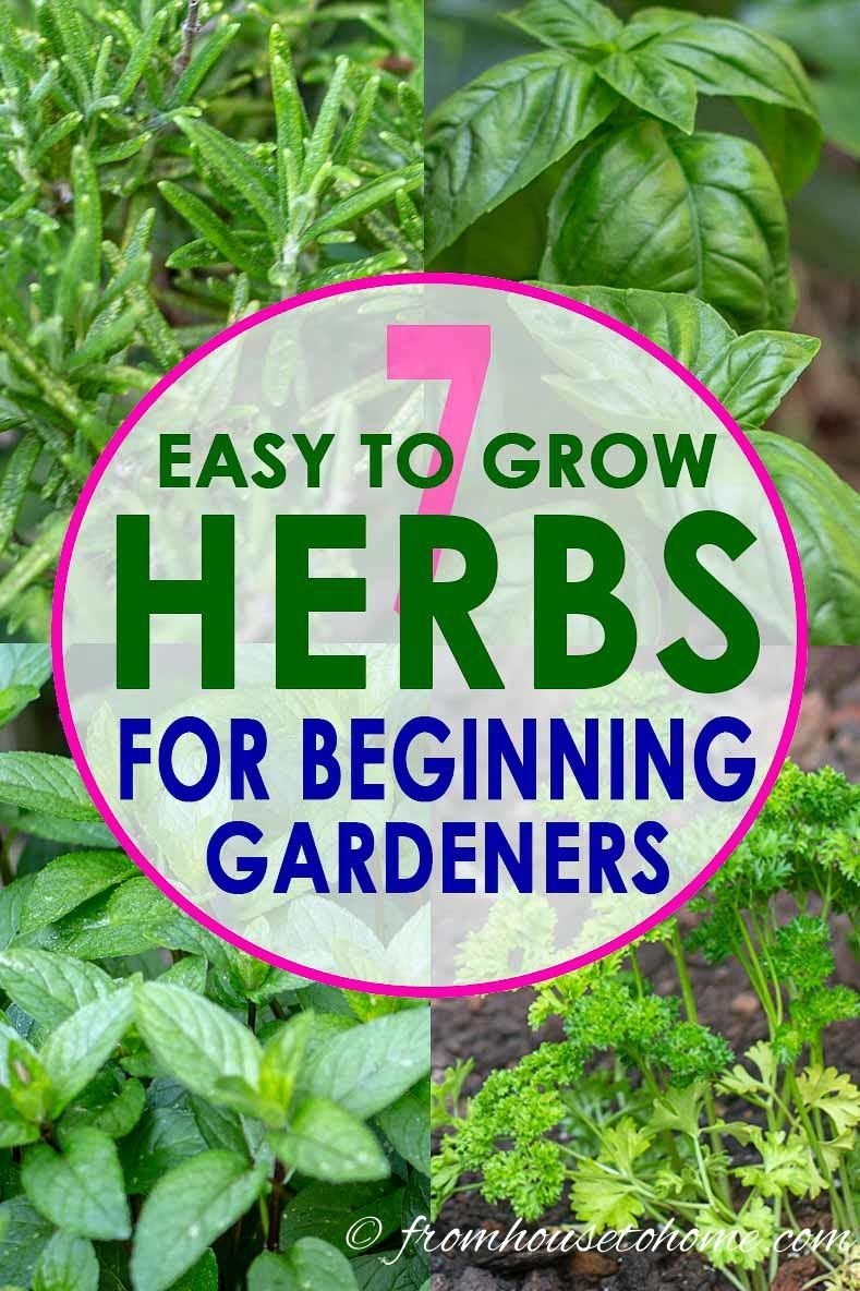 This List Of The Best Easy To Grow Herbs Is The Best! I Love All The Tips  That Will Make Herb Gardening Simple Even For Beginners.