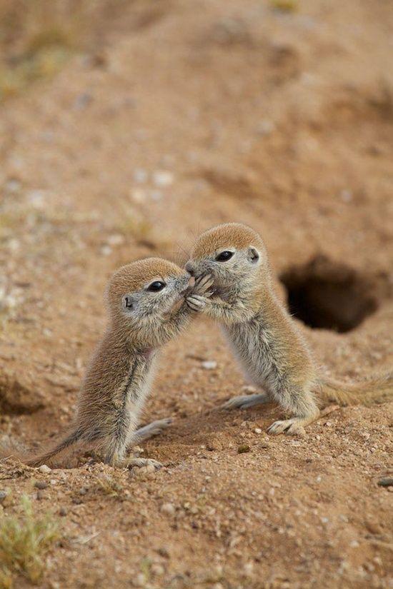 Baby prairie dogs.
