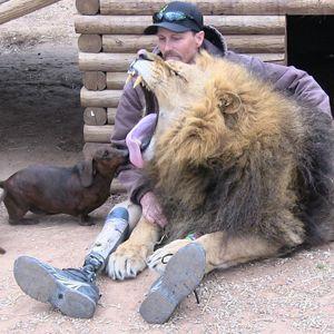 At An Oklahoma Zoo A Lion Bonedigger And A Dachshund Milo