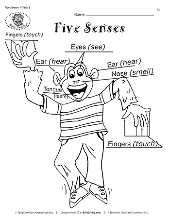 Sense Of Hearing Activities Download And Print Five Senses