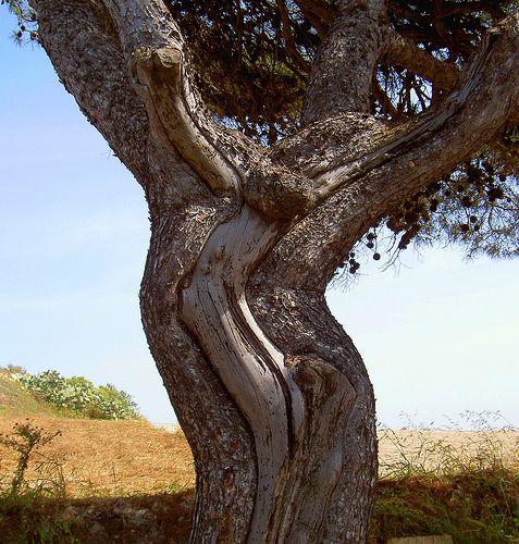 Strange Tree Weird Trees Tree Unique Trees