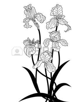 Images For Iris Flower Clipart Flower Clipart Iris Flowers Iris