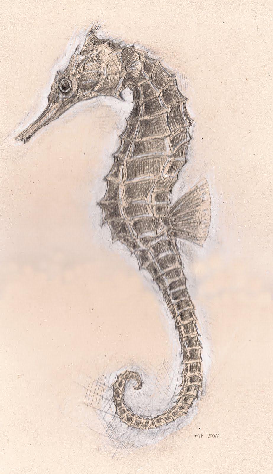realistic seahorse tattoo for Sahara Seahorse art