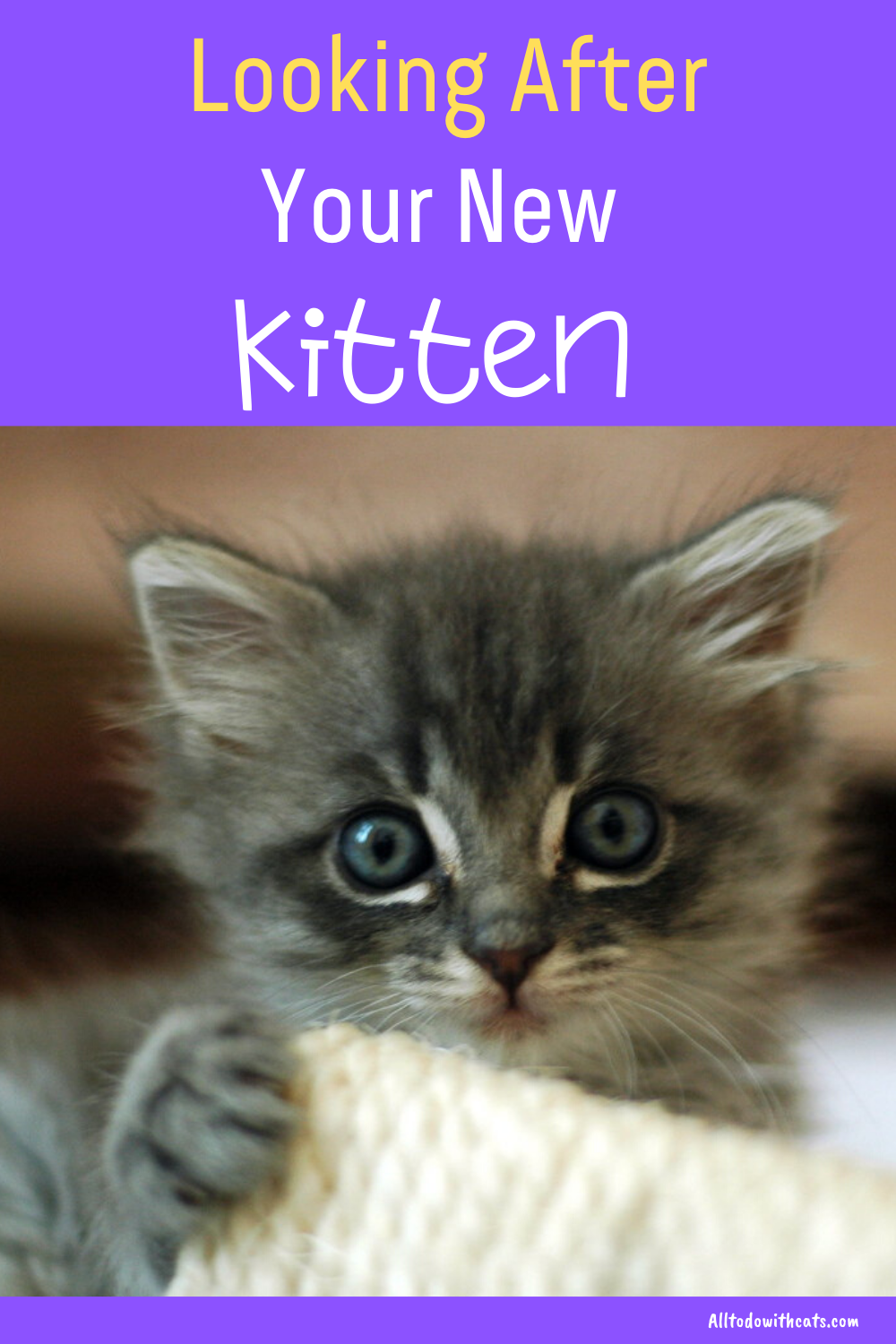 How To Care For A Kitten From Newborn Up To The First Few Months In 2020 Kitten Care Pet Care Cats Getting A Kitten