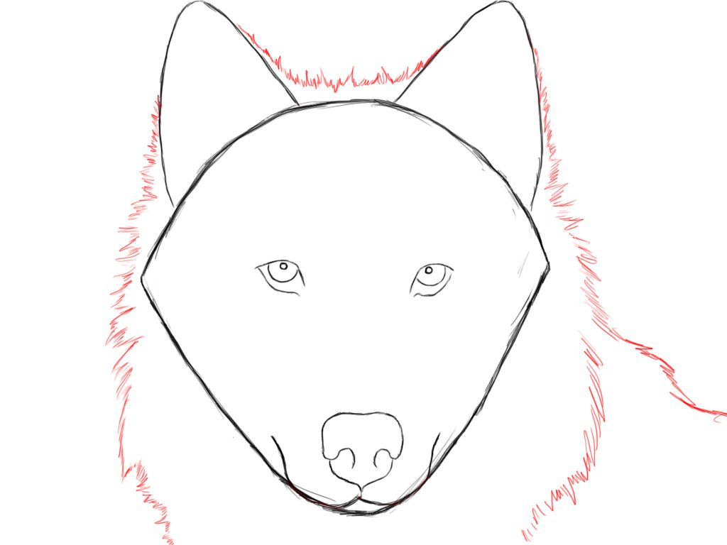 How to draw a wolf in stages 51