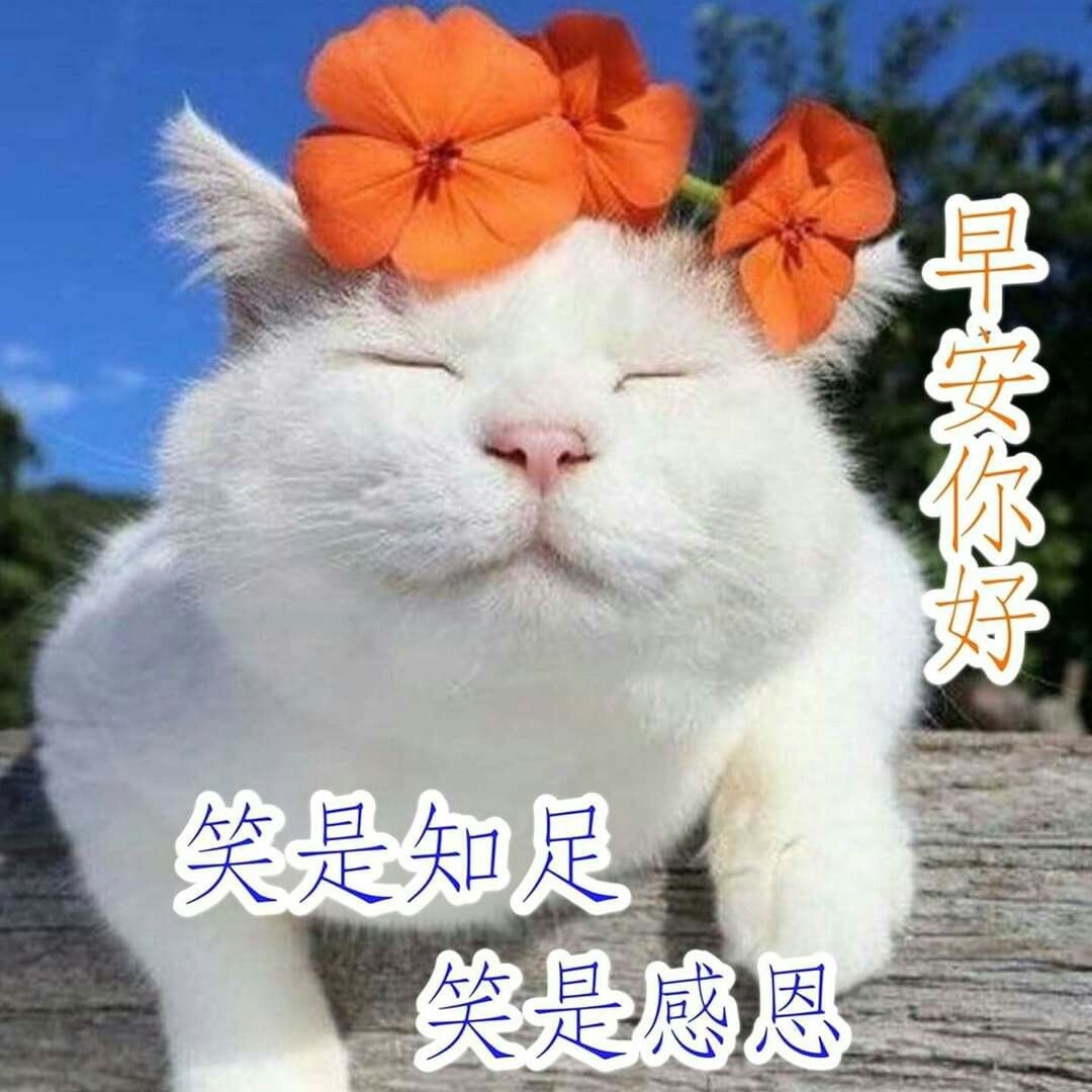 Pin By Betty On 早安 Cats Animals Good Morning