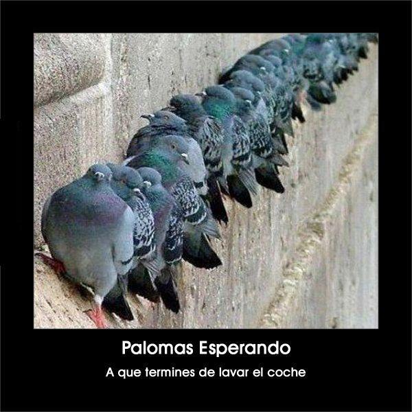 Jejeje palomas esperando #chistas #euforiaonline