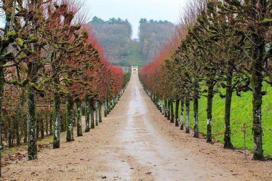 __Loire Valley: Château de Villandry gardens__ - Pinned by Mak Khalaf Travel Château de VillandryGardenLoire ValleyLoire valleyTreesVillandryEuropeFranceNatureTree by pjbragaj