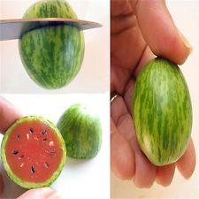 Plant Seeds for Planting 10 Pcs Cute Mini Watermelon Seeds Miniature Fruit Home Yard Garden Decor Plant