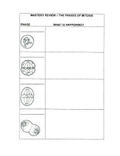 Science Tutor Phases Of Mitosis Mastery Review Graphic Organizer Mitosis Graphic Organizers Mitosis Lesson