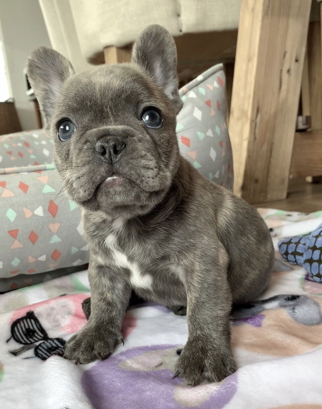 Hudson Nfs Www Poeticfrenchbulldogs Com