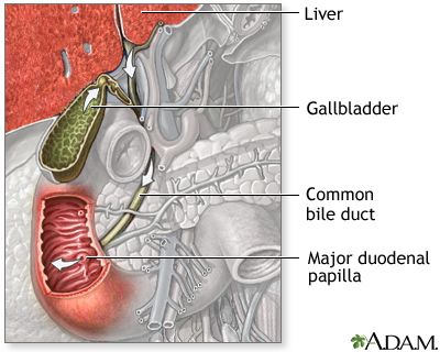 Top San Diego Doctors Hospitals And Clinics Bile Duct Cancer Awareness Bile Duct Cancer Digestive Disease
