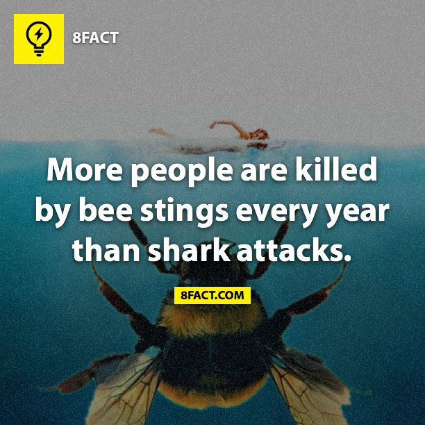 Bee stings Kill more than sharks