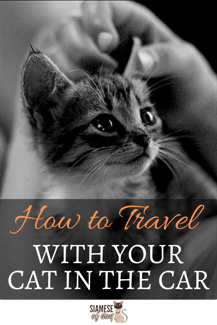 Road Trip Tips How To Travel With Your Cat In The Car Cats Cat Travel Traveling By Yourself