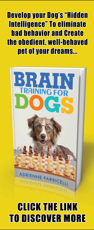Dogtraining Dogs Puppytrain Dog Training Dogs Brain Training