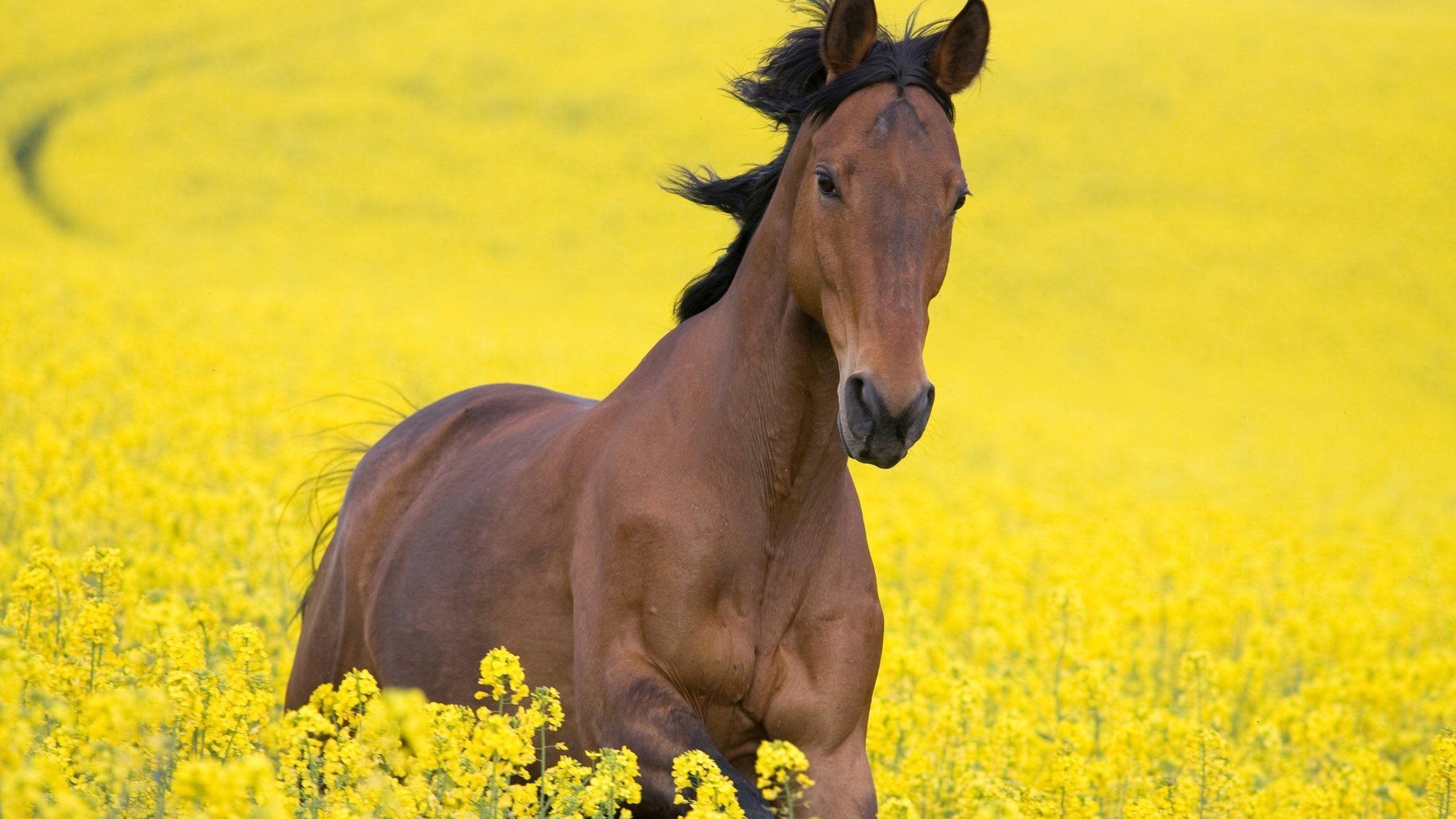 Beautiful Wallpaper Horse Yellow - 03f0d6fc4d8abdd5aed0608c3de83ce0  Graphic_644964.jpg