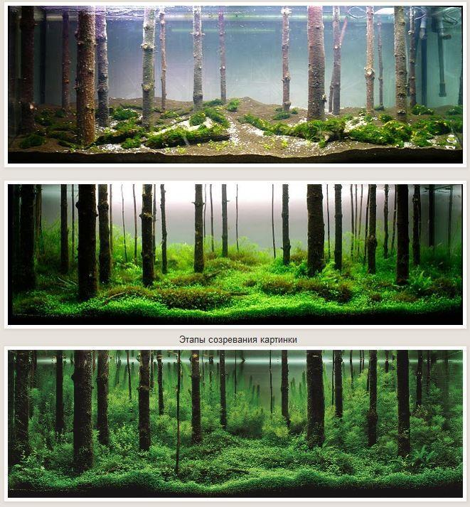 A Aquascape Or Three By Pavel Bautin,: Fish Tank Ideas, Forests, Aquariumu2026