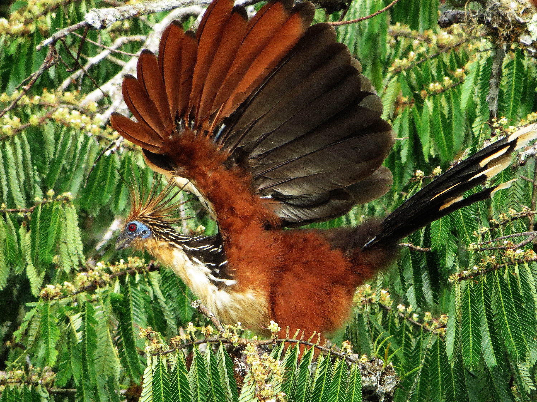 Rainforest Animals, Amazon Rainforest, Jungle Animals, Rainforests, Amazons, Jungles, Ecuador,
