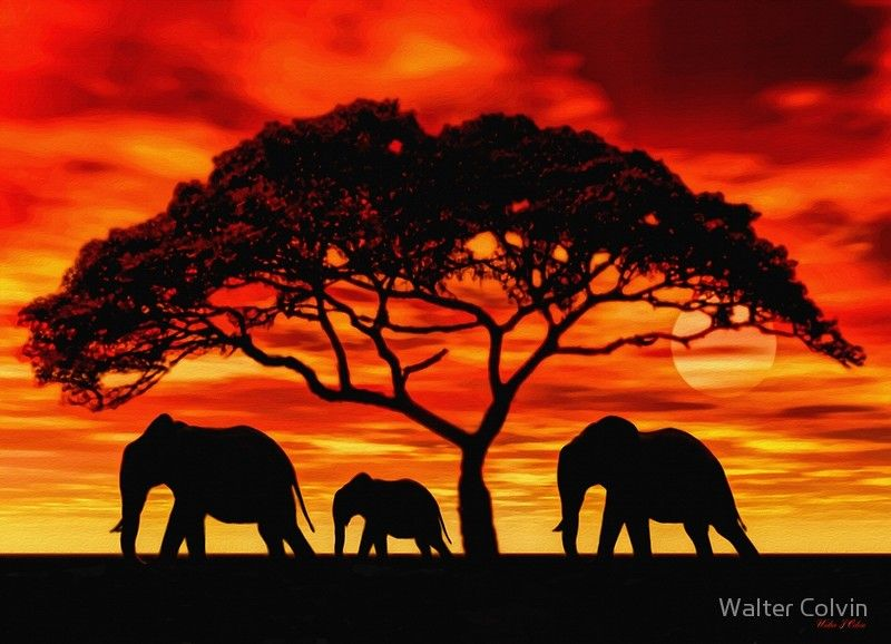 Acacia Elephant Sunset Poster By Walter Colvin Dessin