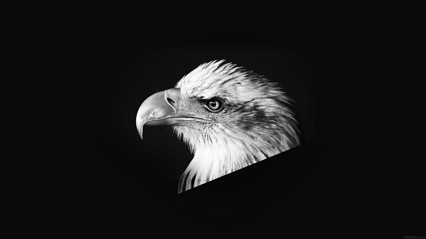 Fantastic Wallpaper Horse Eagle - 03f17e456c5fe515d8397d37e27439d1  You Should Have_312474.jpg